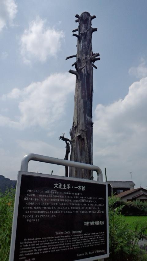 大正土手・一本杉 羽村 8.12