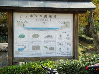 多摩サイ 阿蘇神社 ホタル養殖池