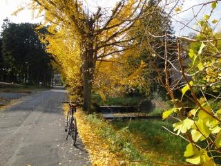 大荷田川 自転車