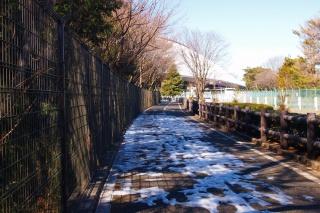 多摩湖周回路 北側 残雪