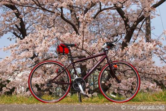多摩サイ 左岸 多摩大橋 桜 2013