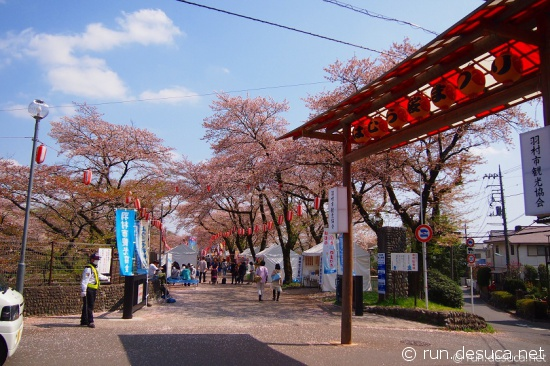 多摩サイ 羽村取水堰 桜まつり 2013