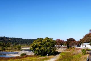 多摩サイ 羽村取水堰