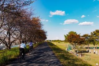 相模川サイクリング