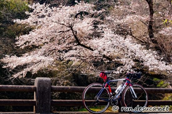 裏和田の桜
